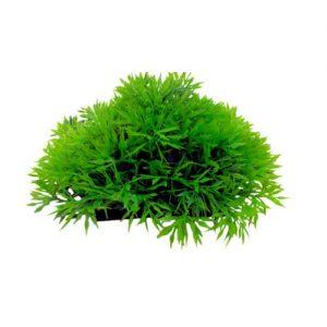 Aquarium Cover Plant