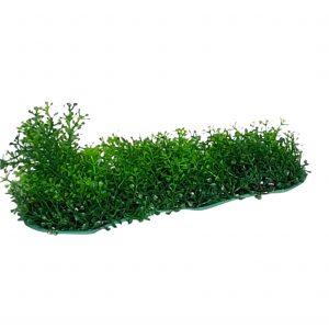 Fine Leaf Plant On Base