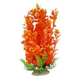 Orange Round Leaf Aquarium Plant