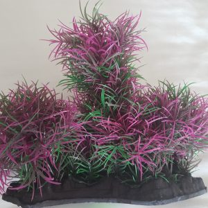 Purple & Green Foreground Coverage Aquarium Plant