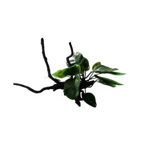 Silk Plants on Driftwood