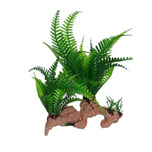 Fern Plant On Artificial Wood