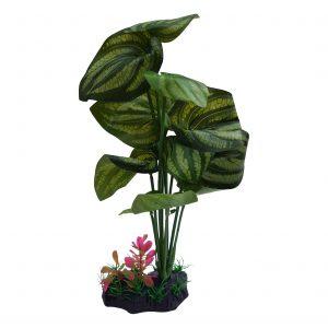 Large Leaf Aquarium Plant