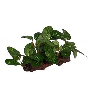 Foreground Plant On Wood