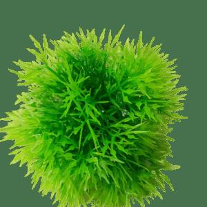 Betta 3.5 Inch (9cm) Diameter Artificial Moss Ball