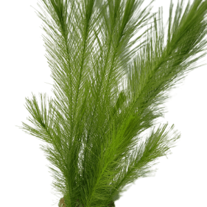 Betta 12 Inch Green Pine Needle Silk Plant With Sand Base
